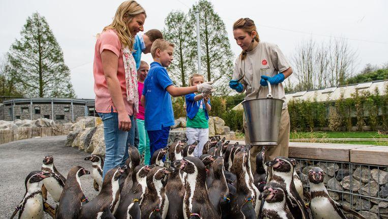De Pinguïnpromenda in Planckendael sluit tijdelijk de deuren.