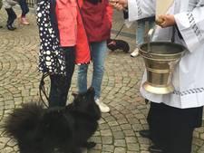Video: Liefde voor het huisdier, van hond tot Turkse Tortelduif, gezegend bij de Sint-Jan