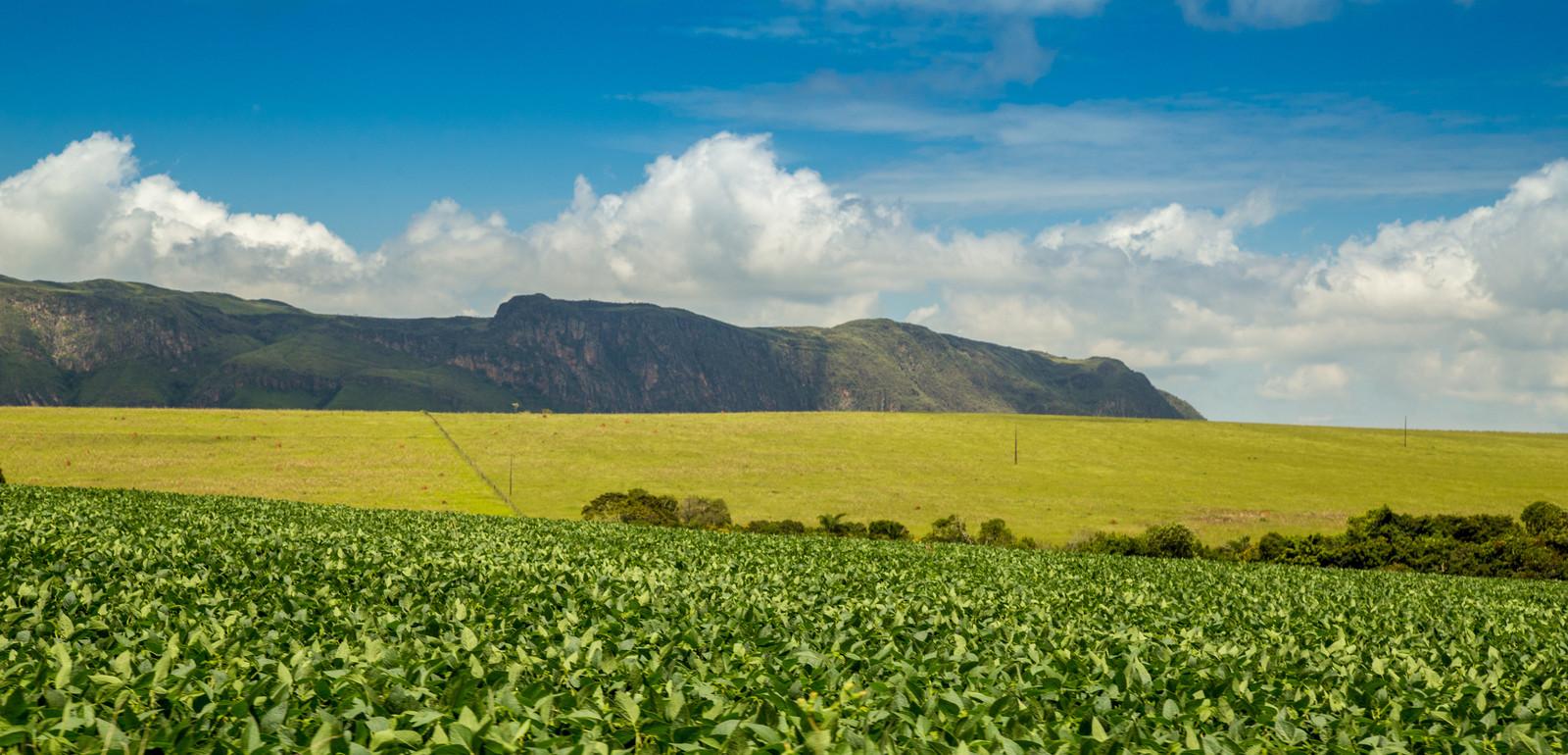 Une plantation de soja au Brésil. Environ 75% de la production de soja est destinée à l'alimentation animale.