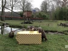 Kerstman verwent dieren ZooParc in Overloon: cadeaus met iets lekkers