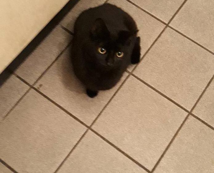 Een van de twee gevonden kittens.