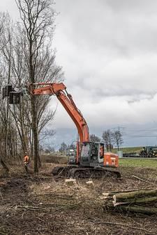 Boom na boom tegen de vlakte langs A58