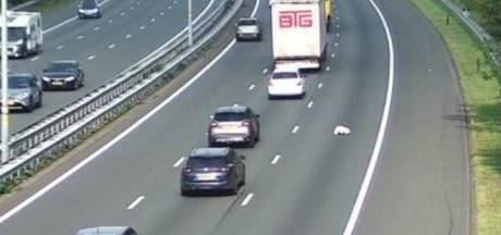 Een 'echte' beer op de weg: knuffelbeer blijft achter op de A12 bij Arnhem