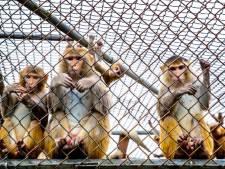 'Alle dierproeven openbaar'