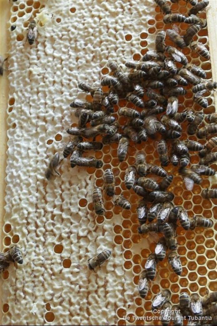 De bijen zijn in nood en het CDA wil daar iets aan doen.