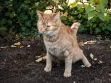 Dordtse huurders moeten hun katten binnenhouden na kattenpoepklachten