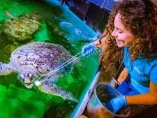 Voor een paar uur dierenverzorger bij Sea Life: 'Schildpad Ernie laat een kinderdroom uitkomen'