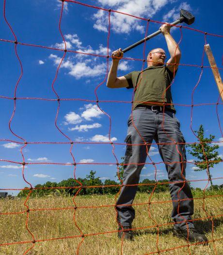 Anti-wolvennet voor schapen in Vlijmen: 'Ik hoop van harte dat dit de oplossing is'