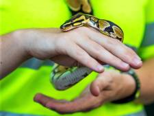 Python die frisse neus ging halen in De Bilt is weer thuis bij zijn baasje