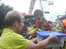 Brandweer Deventer haalt gewonde kraai uit boom
