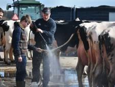Miss Betuwe is vaak ook een ster in melk geven