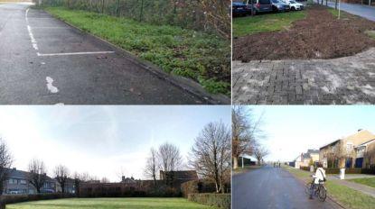 Natuurpunt lanceert plan voor meer bomen  in centrum Tielt