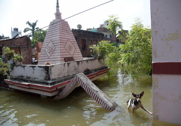 Een hond loopt door het water van de overstroomde Ganges. Door hevige regenval de laatste dagen is de Indiase rivier buiten de oevers getreden. Beeld EPA