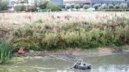 Na vissterfte van zondag: stad neemt maatregelen om te beletten dat vijver nog wordt leeggepompt