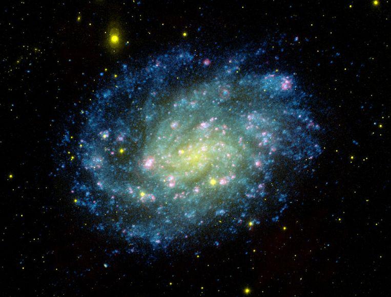 Een van de spiegeltelescopen van het astronomisch observatorium Las Campanas in Chili maakte deze waarneming van sterrenstelsel NGC 300, samen met waarnemingen van Galex (de blauwe kleuren op de foto). NGC 300 is een spiraalvormig sterrenstelsel in het sterrenbeeld Beeldhouwer. Beeld afp
