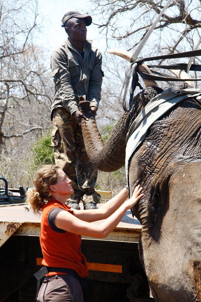Een olifant gaat op transport, 2011. Beeld Prive album