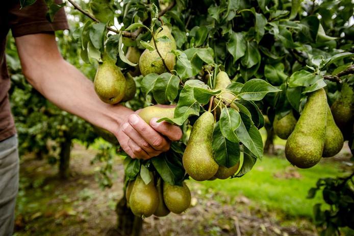 Netten over de bomen zouden 'vretende' mezen weren volgens de provincies.