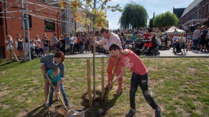 Levensboom voor jarig Sint-Lodewijk