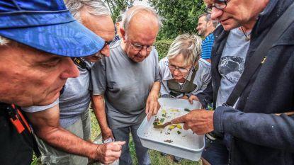 Insectenwerkgroep trekt erop uit in domein De Palingbeek