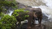 Rangers vinden nog 5 andere dode olifanten in Thaise ravijn waar 6 dieren omkwamen