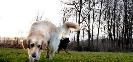Verpakkingen van hondensnacks vol nietjes en punaises aangetroffen in Groningse wijk