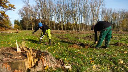 Grote plantactie aan Koeisteerthofdreef: 2.400 nieuwe bomen en struiken gaan de grond in