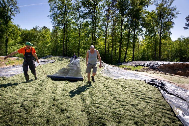 Bij de familie Meijer gaat vandaag het eerste gras van het land, 'de eerste snede', veruit de belangrijkste oogst van gras van het jaar.  Beeld Herman Engbers