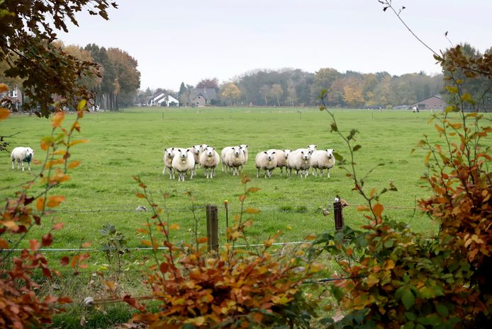 Het gebiedje tussen bebouwde kom van Bavel en de A27 waar de gemeente Breda graag woningen wil bouwen.