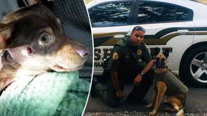 VIDEO. Politieagent ontslagen nadat hij op onschuldige chihuahua schiet
