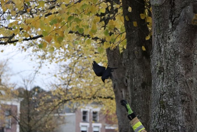 Een vogel raakte verstrikt in visdraad aan de Burgwal in Kampen.