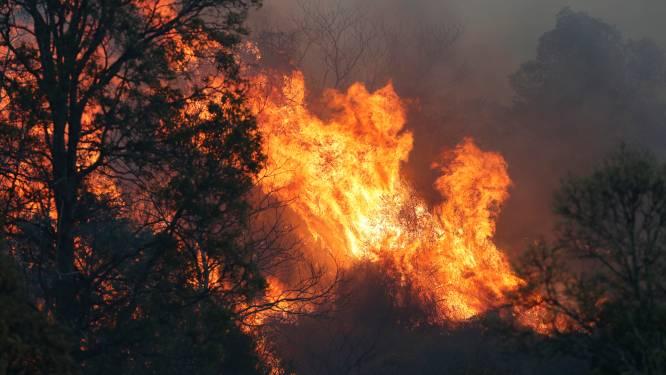 Bosbranden leggen 20 woningen en populaire lodge in de as in Australië
