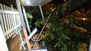 IN BEELD. Ravage aan de Koolmijnlaan in Beringen, weg bezaaid met omgevallen bomen