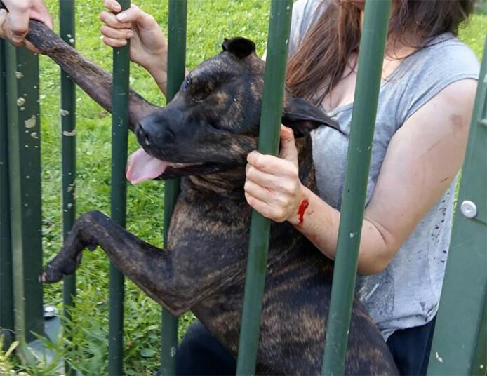 De uit Syrië gevluchte Lyana  overleefde vorig jaar de aanval van de woedende pitbull Charly.