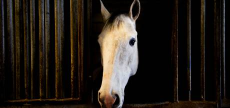 Raad van State: paardenstallen Beemterweg Apeldoorn mogen nog blijven
