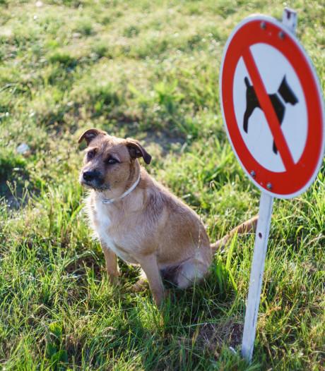 Staatsbosbeheer dreigt met hondenverbod