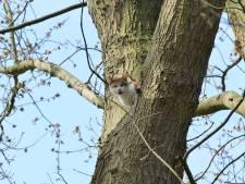 Kat gaat ervandoor na reddingsactie uit boom in Prinsenbeek