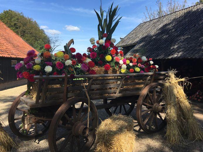 NK dahliakweken bij museumboerderij Wendezoele in Ambt Delden