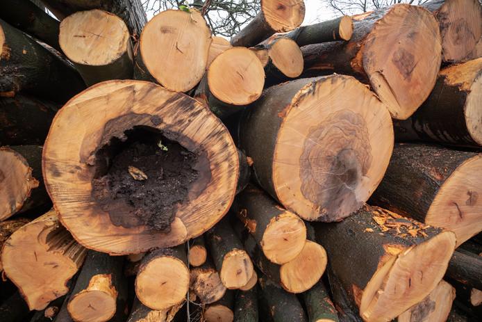 Natuurmonumenten kapt bomen om de biodiversiteit te verbeteren.