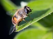 Insecten vormen een probleem, en niet alleen aan de terrastafel