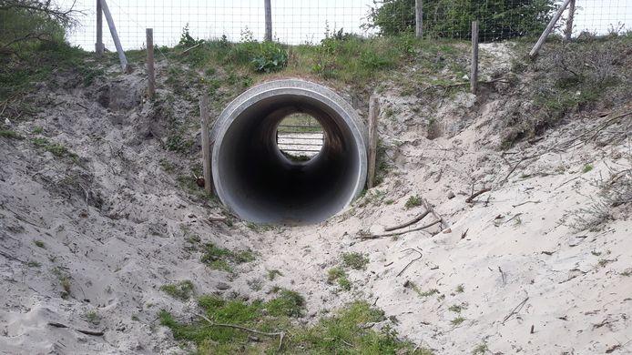Een voorbeeld van een veetunnel. Dit beeld heeft Staatsbosbeheer ook voor ogen in de Verklikkerduinen