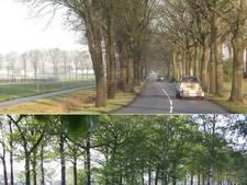 Red de bomen-petitie: Wordt de Jagtlusterallee Dalfsens nieuwe Rechterensedijk?
