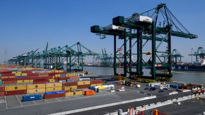 Grote drugsvangst in Antwerpse haven: ruim 1,7 ton cocaïne gevonden in container met bananen