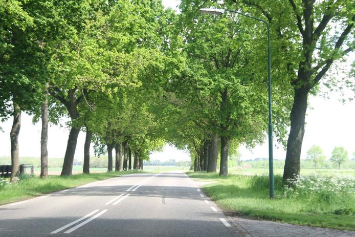 De bomen langs de Almkerkseweg.
