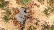 Zeker 275 olifanten sterven mysterieuze dood in Botswana