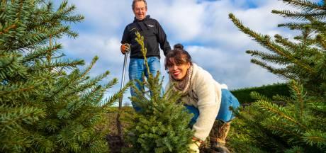 Kerstbomen in Woudrichem krijgen tweede kans in het bomenhotel: 'Donkere coronatijd wat opfleuren'