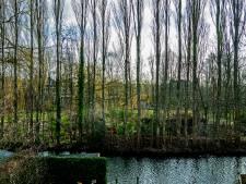 Achter de bomen verschijnt... een villawijk: Bewoners boos over plotselinge kap