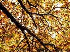 Natuur is basis van ons geluk en onze economie