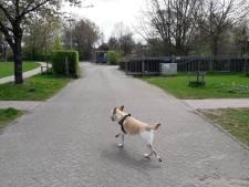 Fel protest tegen plannen bouw van 60 woningen in Park Schothorst