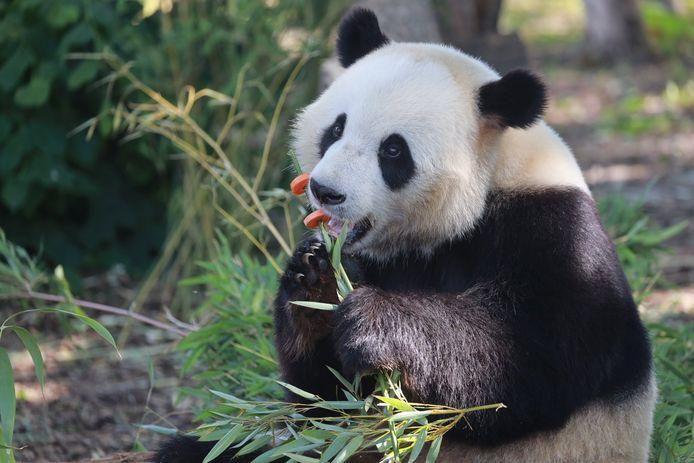 Tian Bao.