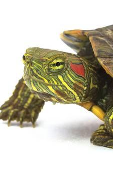 7 kilometer file op A28 door overstekende schildpad